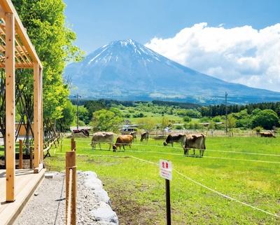【写真を見る】のんびり暮らすウシたちと富士山を眺めながら、牧場グルメを堪能しよう