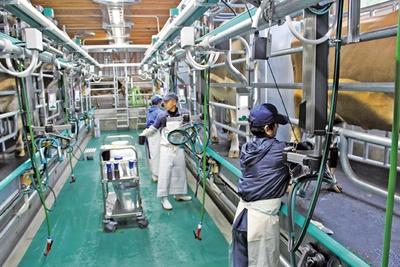 「チーズ体験工房」では、搾乳も見学できる