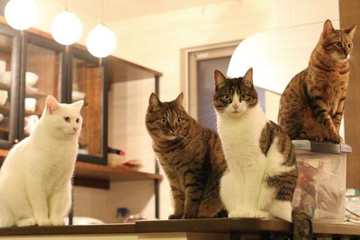 左からミルコ、うしお、ピーチ、レオン