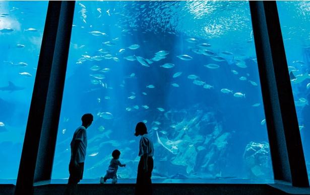 マリンワールド海の中道 / イワシの大群が幻想的に泳ぎ回る「イワシタイフーン」やダイバーが水中で解説する「ダイバー魚(うお)ッチング」など、イベントも毎日ある