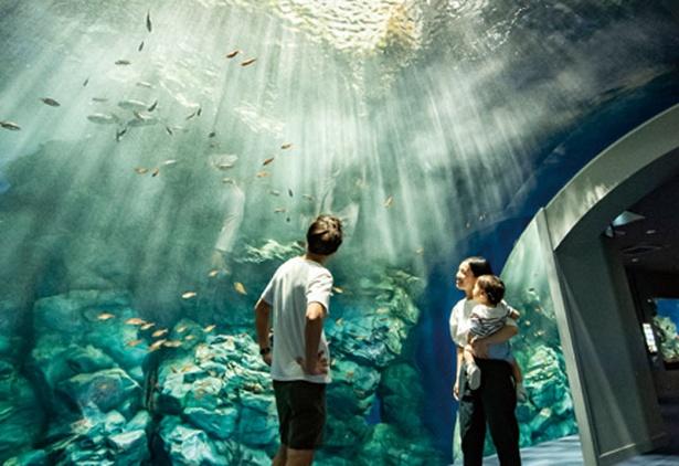 マリンワールド海の中道 / ざばーん!と数分ごとに波が打ち付ける。照明に輝く水泡もきれい