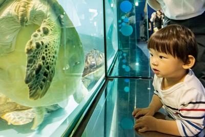 マリンワールド海の中道 / どの水槽もガラスの透明度が高く、魚の細部、表情まで見られる