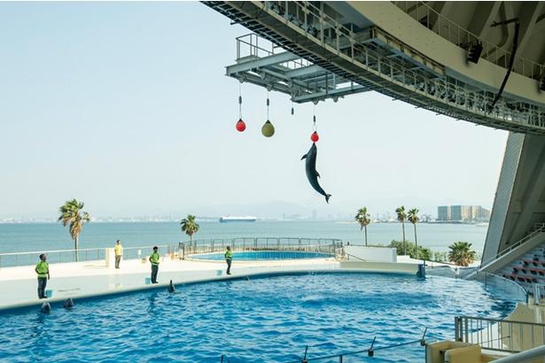 【写真を見る】マリンワールド海の中道 / バンドウイルカは驚異のジャンプ力だ。トレーナーと息ぴったりのショーに、ベビーも大興奮!