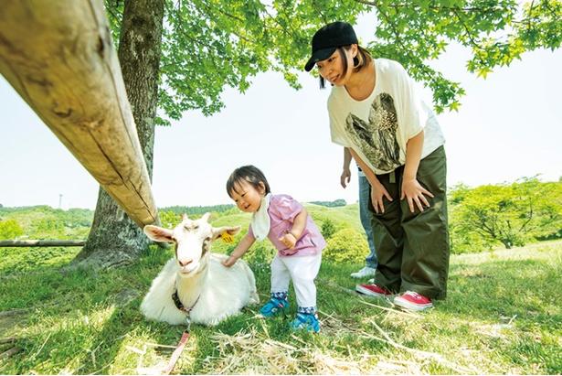 【写真を見る】三瀬ルベール牧場 どんぐり村 / ヤギさんにタッチ。「メェ~、メェ~、優しく触ってね」