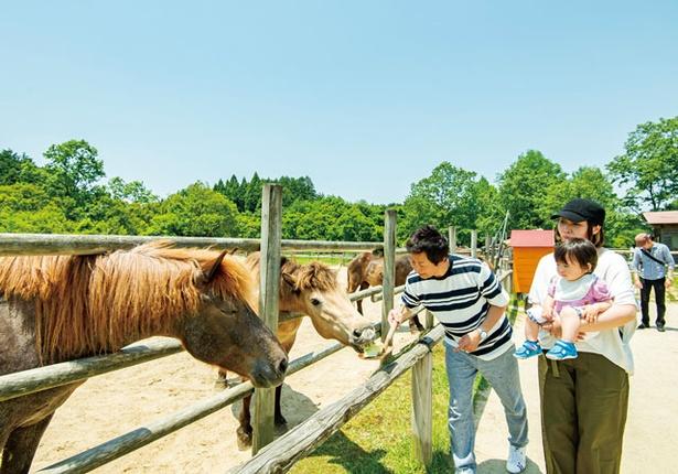 三瀬ルベール牧場 どんぐり村 / おりこうな、お馬さんたちとも仲よしになれる。たてがみがフッサフサ♡ 馬やポニーのエサ(100円)も販売