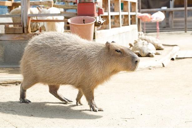 トリアス / 長崎バイオパークが運営する「ふれあい動物園」。3歳以上400円