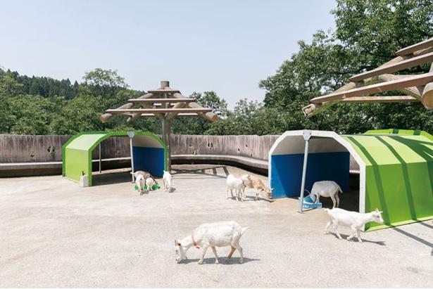 ふれあい動物広場は中学生以上300円、小学生150円、未就学児無料 / 四季の里旭志キャンプ場