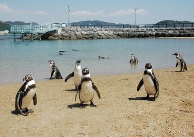 長崎ペンギン水族館 / ふれあいペンギンビーチ