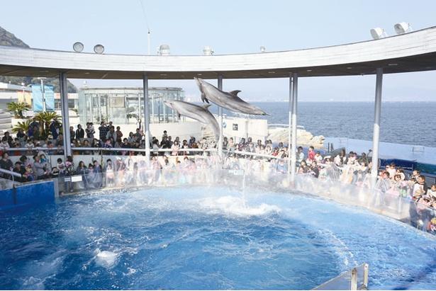 【写真を見る】大分マリーンパレス水族館「うみたまご」 / 2階の屋外イルカプールでショーを実施。間近で見られて迫力満点!