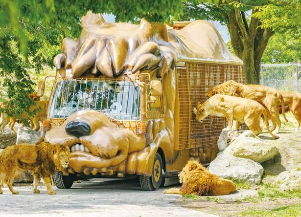 アフリカンサファリ / ジャングルバス(高校生以上1100円ほか)。網柵越しにエサやりができる