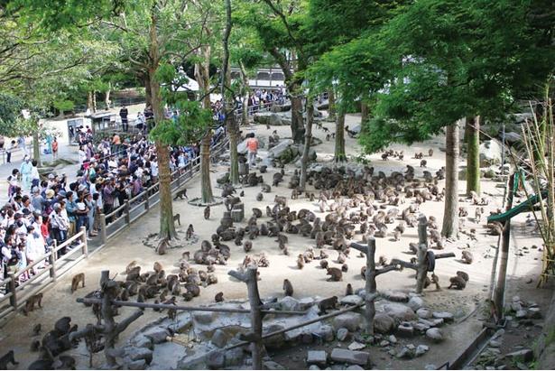 国立公園 高崎山自然動物園 / 1000頭以上が生息。敷地内へはモノレール(100円)でも行ける