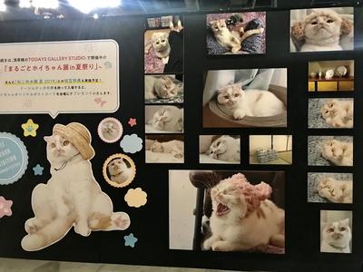 【画像を見る】「ねこ休み展」が東京ドームシティにて超最大規模で開催!