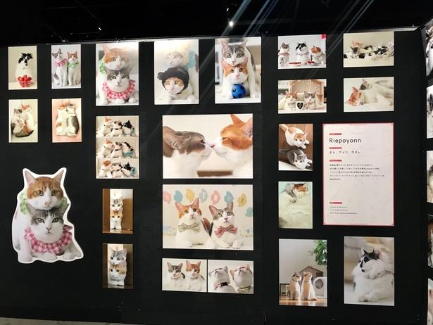 「ねこ休み展」が東京ドームシティにて超最大規模で開催!