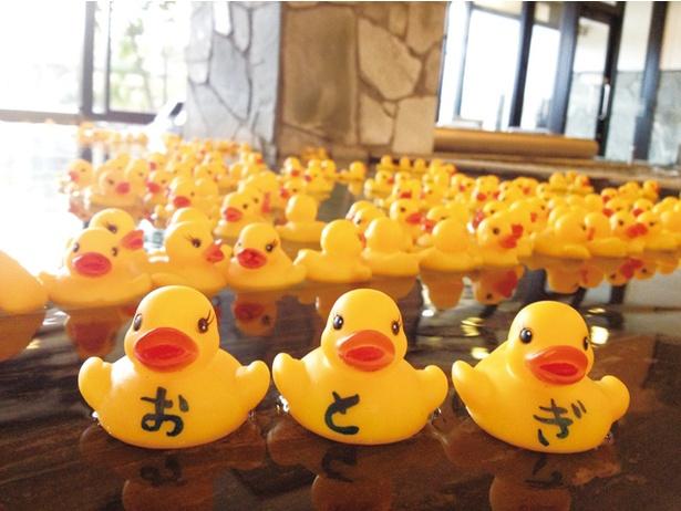 【写真を見る】本城天然温泉 おとぎの杜 / 不定期の「あひる風呂」。2019年4月の館内改装で、サウナ設備を一新した
