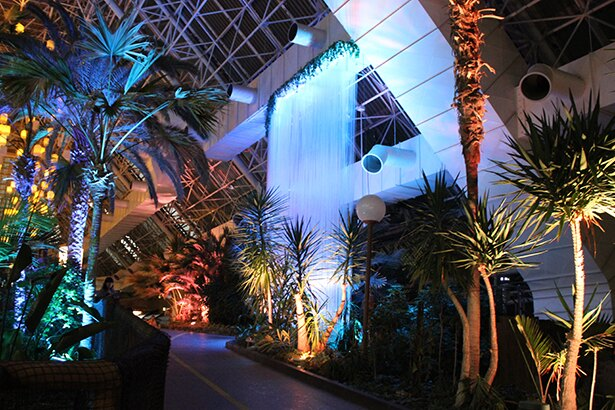 雲霧林をテーマにしたシンガポールのリゾート施設・クラウドフォレストをヤシ並木通路に再現