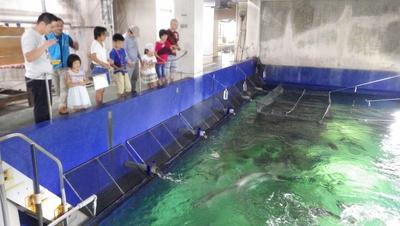 巨大な水槽の目の前で餌やり体験ができる