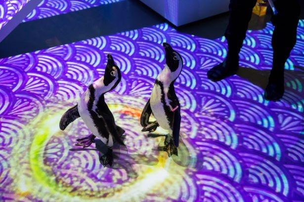 """ペンギンたちの動きに合わせて、光の""""ネズミ花火""""が現れる"""