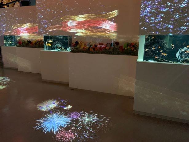 日本の夏に欠かせない花火と金魚を最先端のアートで表現