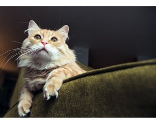かわいい猫たちの写真が大集結
