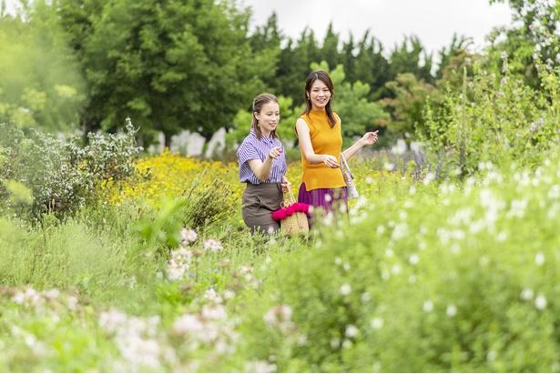 夏のエキナセアやベルガモットなど、100種以上のハーブを栽培するハーブ園を散策。ハーブの効能などを解説してくれるハーブガイドもあり