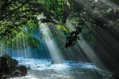 【写真を見る】まるでジブリの世界…!神秘的な絶景に心奪われる / 「円原の伏流水」(岐阜県山県市)