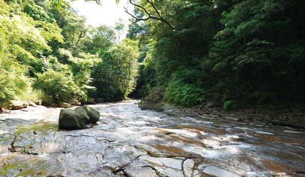 千畳敷 / 千畳敷へは県道1号沿いの丸尾自然探勝路入口から徒歩で。丸尾滝の上流にある。足元には特に気を付けて