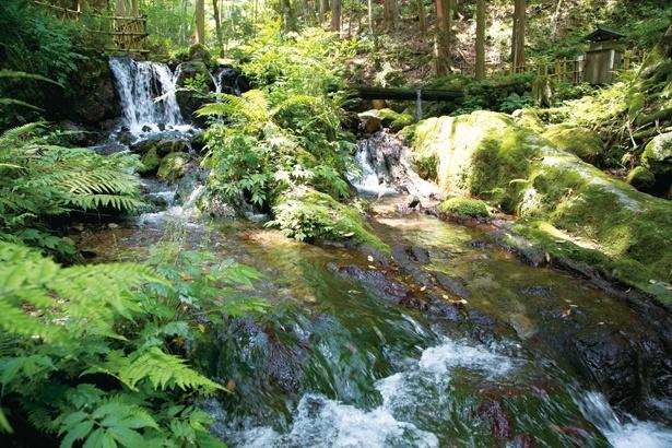 名水百選に選ばれた清らかな水。苔むした岩を木漏れ陽が照らし、ひんやりとした風が吹き抜ける / 瓜割の滝