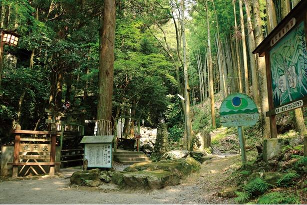 竜王峡キャンプ村 / 北九州国定公園内にあり、標高200mの福智山中腹に位置
