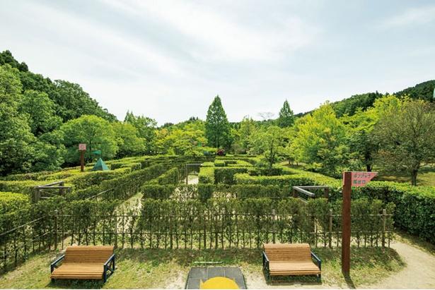 生け垣を刈り込んで作った「グリーン迷路」 / 夜須高原記念の森