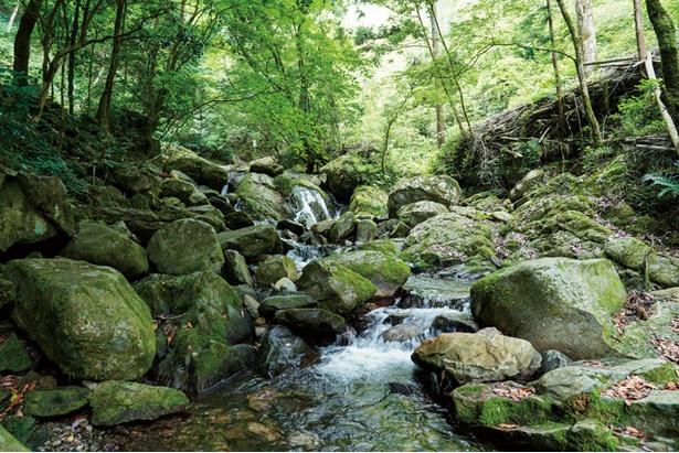 野河内渓谷 / 入口から歩いて10分ほどのところにある、最初の渓谷の見どころ「むくろうじ渕」