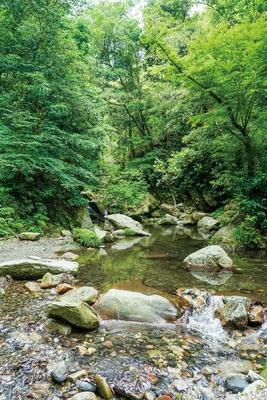 【写真を見る】野河内渓谷 /「むくろうじ渕」の手前には浅瀬の水遊びスポットもあり