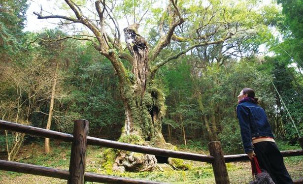 【写真を見る】武雄神社 / パワースポットとしても知られる、武雄市最古の神社