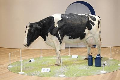 乳牛の模型は、長澤まさみが出演したカルピスのCMで実際に使用された