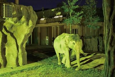 アジアゾウ舎前やアシカ池周辺に、記念撮影ができるイルミネーションスポットも登場する/2019東山動植物園ナイトZOO