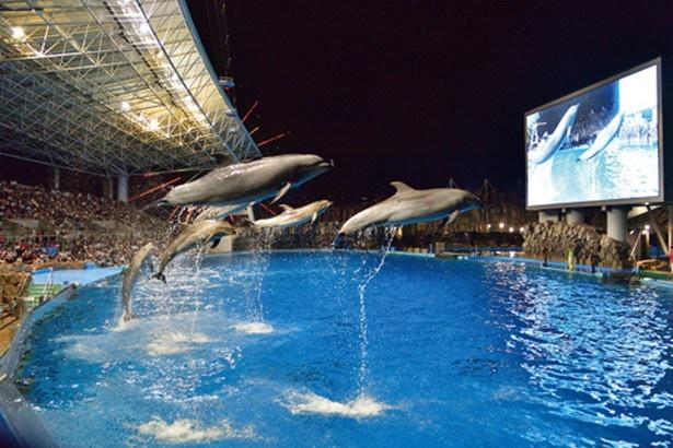 【写真を見る】イルカのナイトパフォーマンスも/サマーナイトアクアリウム