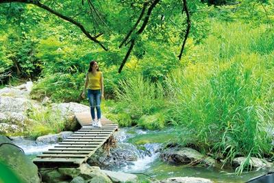 溶岩流で形成された稲葉川。水の透明度が高く、川沿いを歩くだけでも気持ちいい/八反の滝