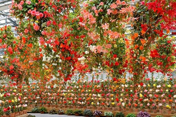 【写真を見る】花々に囲まれた空間「ベゴニアガーデン」