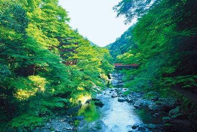 ホタルやオオサンショウウオなど、清らかな水にしか棲息しない生き物がいる/清滝川