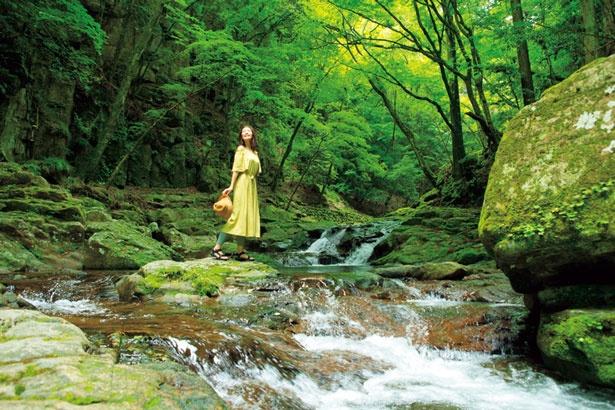 滝の入口から50分ほどに位置する姉妹滝。姉滝(右)、妹滝(左)が、仲のよい姉妹を思わせることから名付けられた/赤目四十八滝