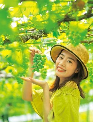15軒のブドウ園がある「青蓮寺湖観光村」。各ブドウ園ではブドウの販売も行っている/青蓮寺湖観光村