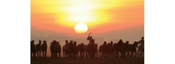 ハンガリーの大平原を疾走する馬