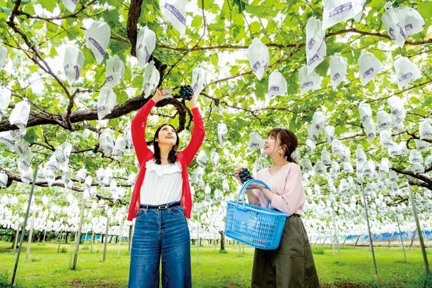 コース01(原鶴&うきは)【遊・食】旬の果実を堪能できる「うきは果樹の村 やまんどん」