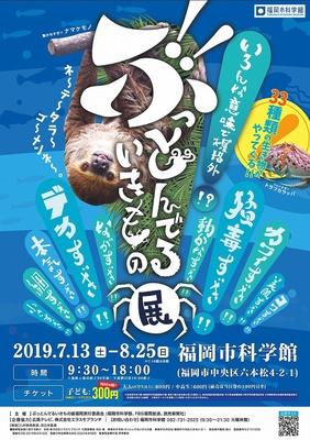 【写真を見る】ぶっとんでるいきもの展 / ちょっと変わった愛すべき生きものたちが福岡市科学館に集合