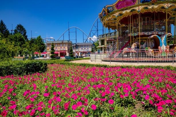 鮮やかなピンクの花々が咲き誇る、リサとガスパール タウンの「ピンクガーデン」。※写真は8月5日撮影