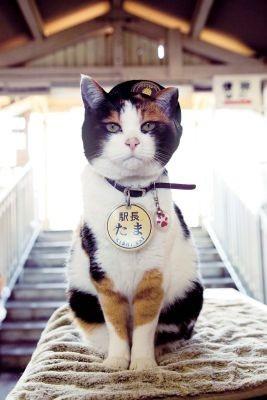 和歌山電鉄貴志川線の終点「たまミュージアム貴志ステーション」で大人気のたま駅長♪