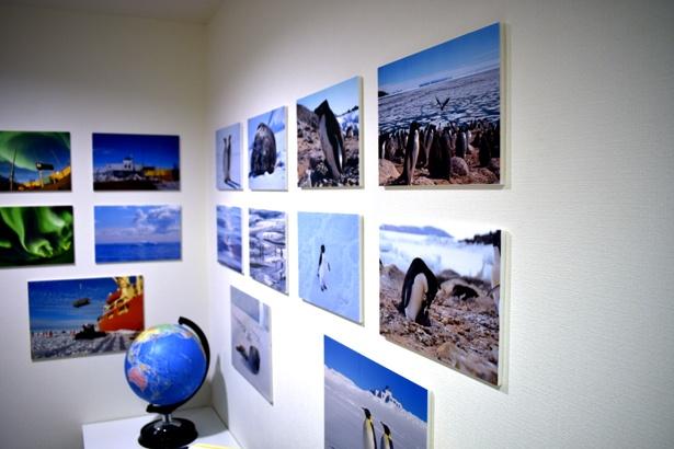 南極のことを知るために、壁には南極の自然やペンギンの写真が飾られている。写真は、実際に観測隊に参加したメンバーが撮影したもの/キッザニア甲子園