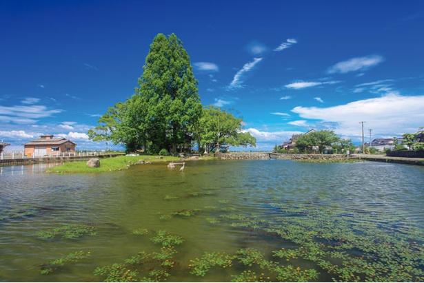 緑の葉が茂る時期は、水と木々の爽やかな景色を見ることができる / 縫ノ池