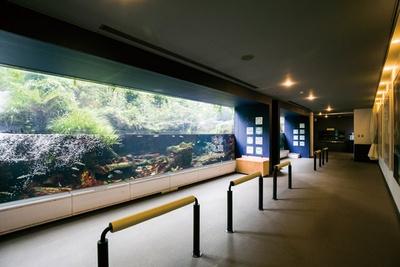番匠川に棲む魚を中心に展示する「番匠おさかな館」 / 道の駅やよい