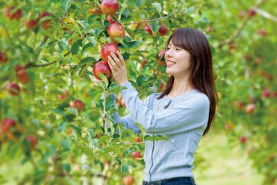 約1.5平方キロメートルと広大な農園に15種類約300本のリンゴの木を栽培 / まるじゅんリンゴ園