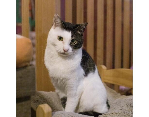 保護猫カフェ(ネコリパブリック東京)
